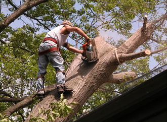 We remove dangerous trees