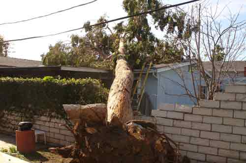 24 hour emergency tree removal service available